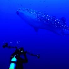 Galapagos Diving Cruises with Surtrek Tour Operator - Adventure Travel Photos