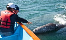 Bonding with a Grey Whale in Baja - Adventure Travel Photos