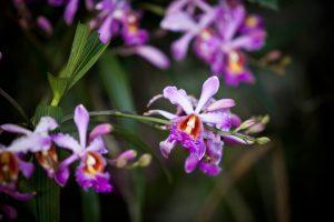 Wild Orchids near Machu Picchu