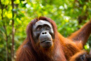 Explore Highlights of Sumatra