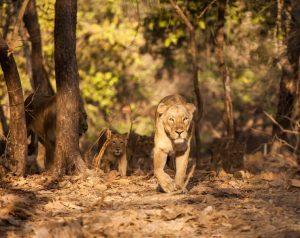 Explore Wildlife of Gujarat