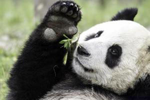 Get up close with Pandas