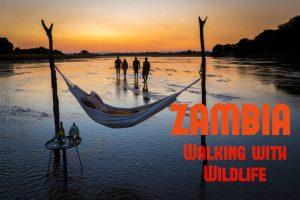 Zambia Walking with Wildlife