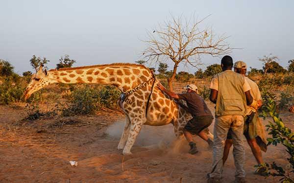Namibia Safari Wildlife Conservation Wilderness Travel