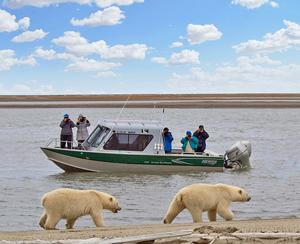 Polar bear viewing near Kaktovik, AK