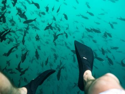 Latin Trails Snorkeling in Galapagos Ebook